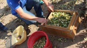 Analyse de la granulométrie du maïs ensilé grâce au tamis secoueur.