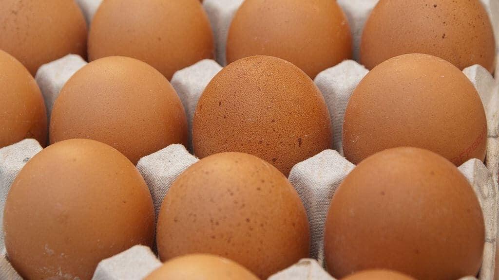 Treize lots d'oeufs contaminés trouvé en France en provenance des Pays-Bas