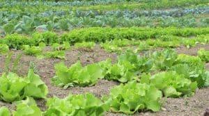 Les français consomment des produits bio : une hausse de 14% par rapport à 2016, et ce tiré par la grande distribution.
