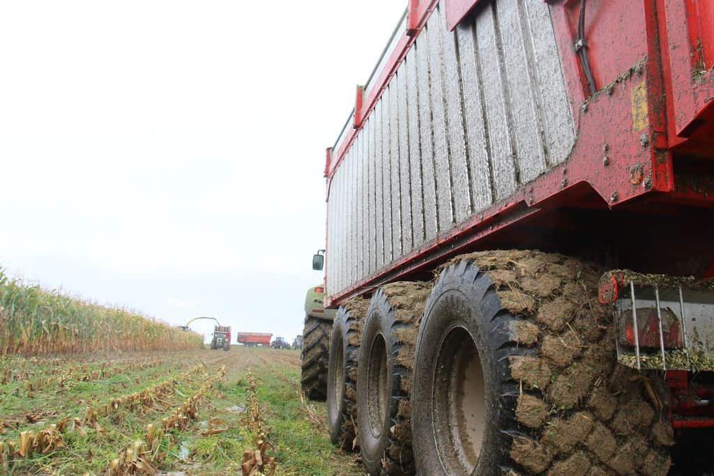 jeantil-cuma-du-sillon-morbihan-benne-fond-poussant-BR-ensilage-maïs-fourrage-récolte-chantier-organisation-champs-maïs