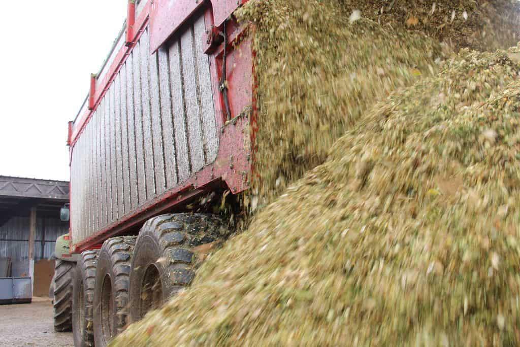 jeantil-cuma-du-sillon-morbihan-benne-fond-poussant-BR-ensilage-maïs-fourrage-récolte-chantier-organisation-silo-maïs-vidange