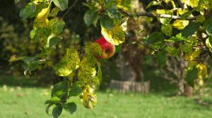 Le président de l'Inra affirme sa volonté de présenter un programme pluri-disciplinaire en faveur de l'agriculture bio.