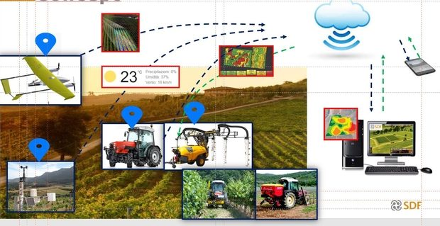 SDF viticulture