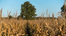 Le président Macron se présentait à Rungis dans le carde des états généraux de l'Alimentation : annonce d'une loi pour mieux rémunérer les agriculteurs. Agriculture en France.