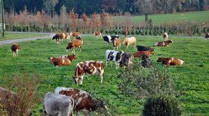 impacts du traité sur l'élevage, mais aussi un renforcement des contrôles menés au sein de l'Union européenne CETA élevage