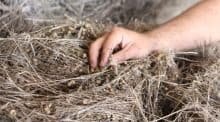 Les producteurs ont assuré une récolte de qualité.