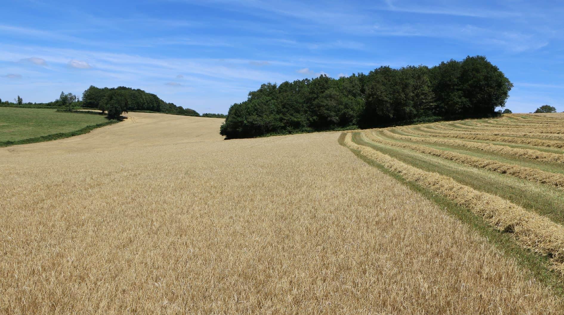 Moisson récolte blé 2017