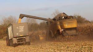 Moissons 2017 maïs grain