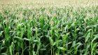 MSA étude santé agriculteurs