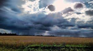 Les exploitations sont régulièrement exposées à des événements climatiques. Pour contrer ces risques, les pouvoirs publics incitent les agriculteurs à souscrire une assurance-récolte