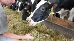 Introduire des légumineuses dans l'alimentation des troupeau avec un approvisionnement local peut faire partie des orientation avec lesquelles la profession doit créer de la valeur.