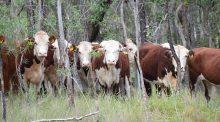 Ferme 4000 bovins : le commissaire chargé du projet donne un avis défavorable.