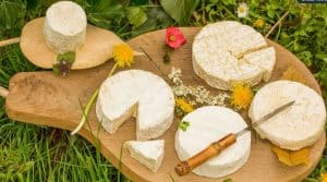 Producteurs caprins, salariés-fromagers, consommateurs-citoyens, ont créé sous forme de SCIC, la fromagerie du Pays Mothais