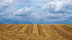 Réguler le foncier agricole et réglementer l'accaparement des terres agricoles en France, volonté du ministre de l'Agriculture.