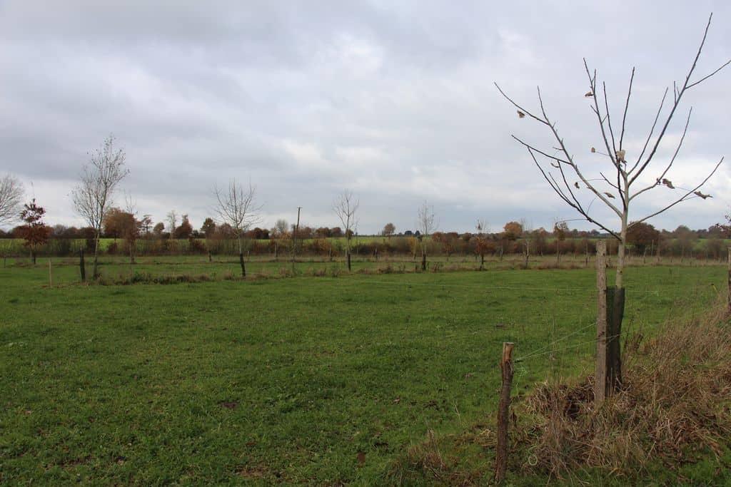 Dominique-bordeau-agroforesterie-elevage-mayenne-portes-ouvertes-2017-alignement-noyer