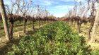Les couverts végétaux, maîtrisés par les céréaliers, séduisent de plus en plus les viticulteurs : comment adapter cette technique dans les vignes ? C'est le dossier viti supplément Entraid de novembre 2017.