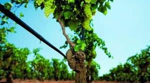 Sécheresse en zone viticole: quelles solutions pour irriguer?