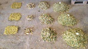 Opération tamis et qualité des grains pour les troupeaux, apprentissage récolte, coupe... Ensilage, ensiler à la bonne période.