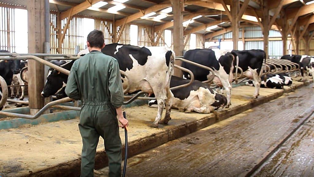 grand troupeau. Observation du troupeau par un apprenti.