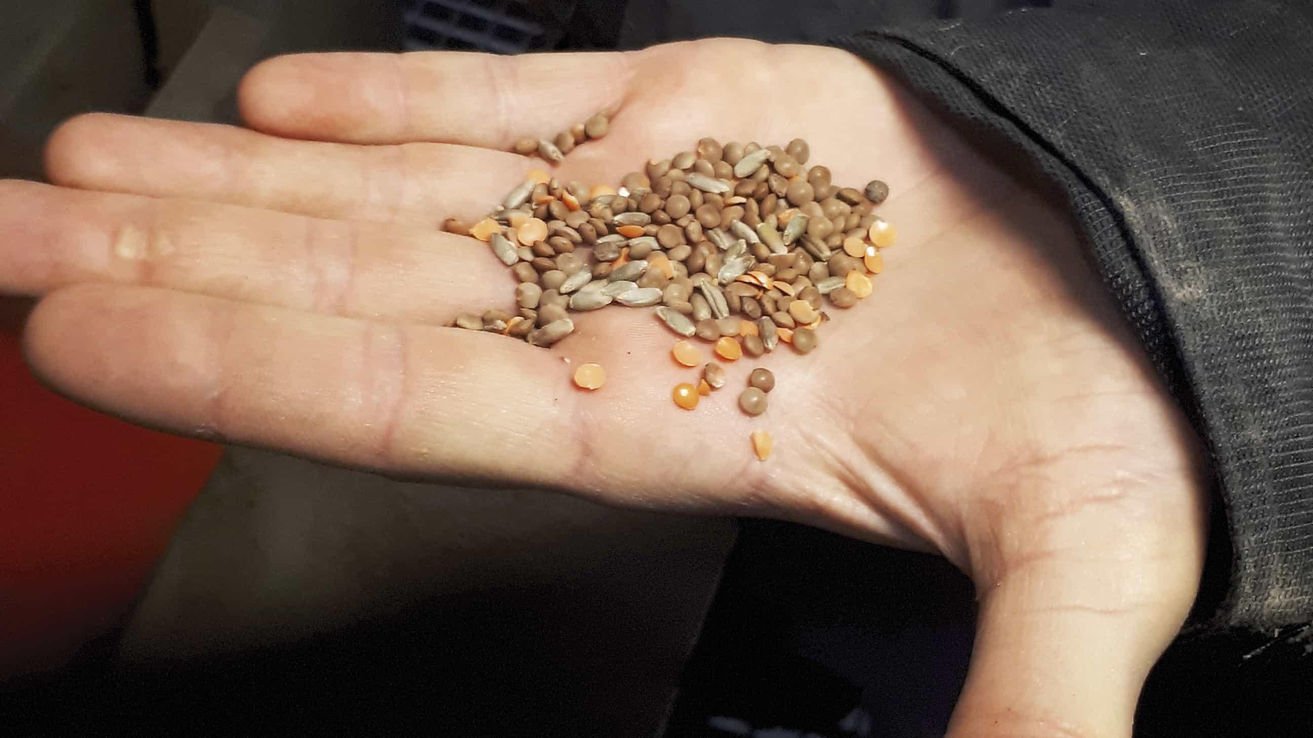 Rencontre dans la Marne avec la cuma du Lentillon : tri, investissement machines, matériels, semis, récolte.