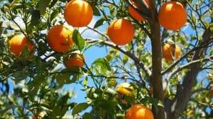 Nouveau label zéro résidu pesticides fruits et légumes frais