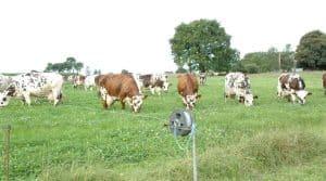 Bovins, ovins, caprins, équins, herbivores, gaz à effet de serre, environnement, économie,