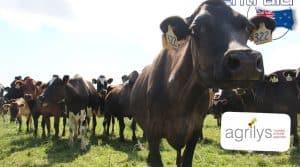 production laitière Nouvelle Zélande La prairie paturée est l'élément central de l'atelier laitier chez Bill et Patricia Hare