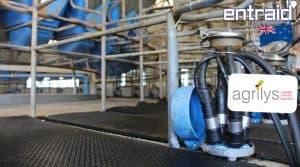 traite vaches laitières Nouvelle Zélande : la griffe prête pour la traite dans un roto