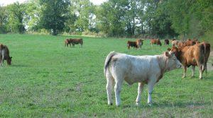 L'Institut de l'Elevage a publié une estimation des revenus des producteurs de bovins viande en 2017 qui globalement se redressent, en particulier pour les systèmes avec cultures
