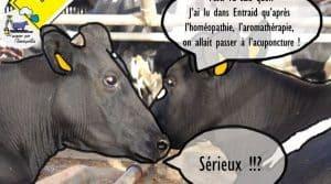 Santé du troupeau : quel est le coût moyen pour vacciner son troupeau ? Quelles sont les méthodes de médecines alternatives pour soigner mon troupeau ? Réponse avec l'homéopathie et l'acuponcture