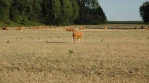 tuberculose bovine, troupeau, élevage, faune sauvage, Aurore Raffier, Coopérative Départementale Agricole d'Action Sanitaire (CDAAS), Fédération des cuma de Haute-Vienne