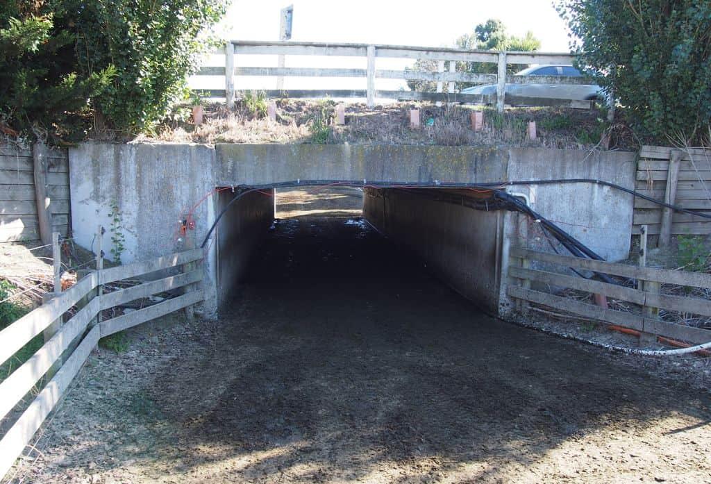 exploitation laitière Nouvelle Zélande passage pour les troupeaux.