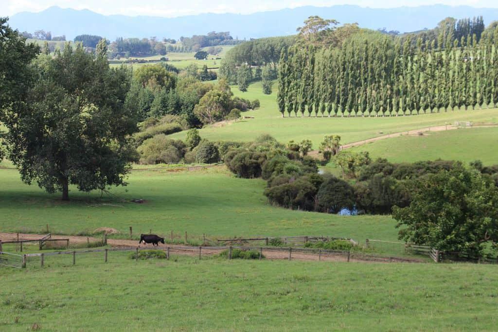 Riviere-elevage-laitier-nouvelle-zelande-environnement-qualité-de-l-eau-milking-plateform (2)