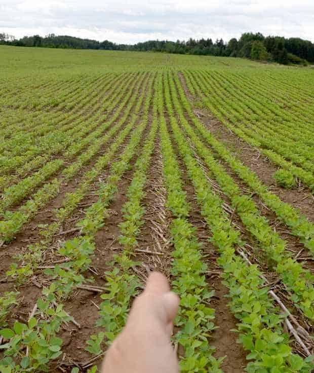 soja semis direct maïs A-Cubed