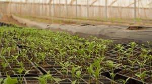 Développer l'agriculture biologique en France : le gouvernement prévoit 1,1 milliards d'euros