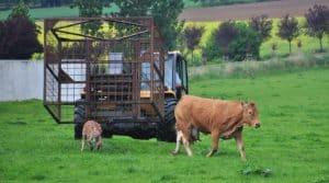 Wallonie, cage mobile, élevage, astuces, transport, bétaillère, manutention, bovins, veaux