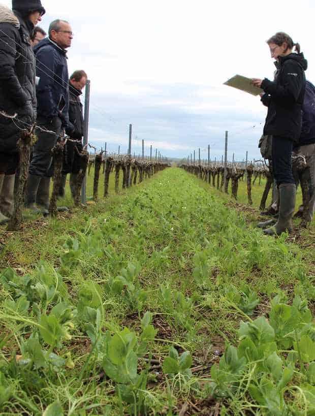 couverts vigne biomasse