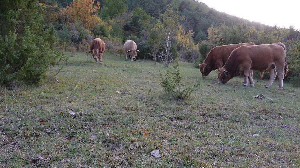 pastoralisme aides PAC ovins, caprins, bovins, surfaces pastorales, ânes, surfaces pastorales, pastoralisme, aides PAC