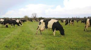 production laitière irlande