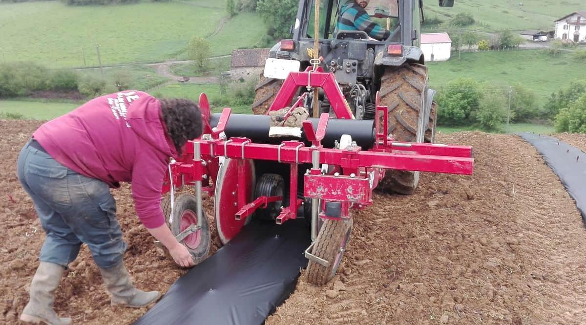 Opération de pose de paillage biodégradable sur vignoble juste planté.