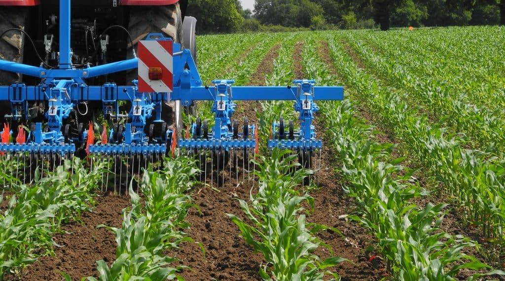 Bineuse Monosem utilisée sur maïs avant fermeture de l'inter-rangs