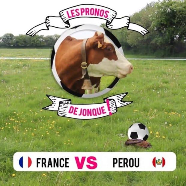 Aller sur la page Facebook Entraid' pour le Match France Pérou, les pronostics de Jonque la vache dans le Finistère