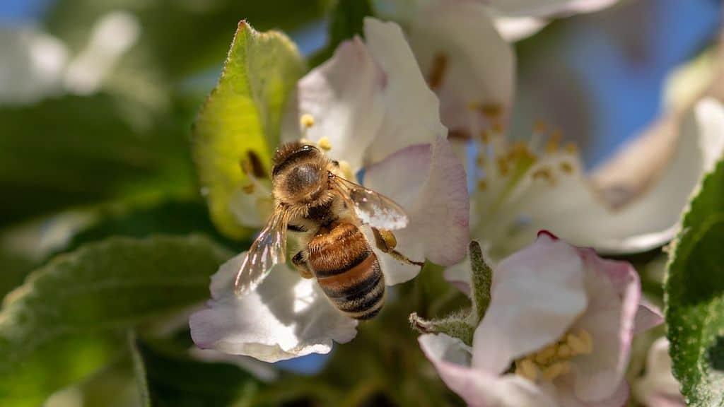 apiculture en France, le gouvernement veut recenser la mortalité des abeilles suite à l'alerte donnée par les apiculteurs français.