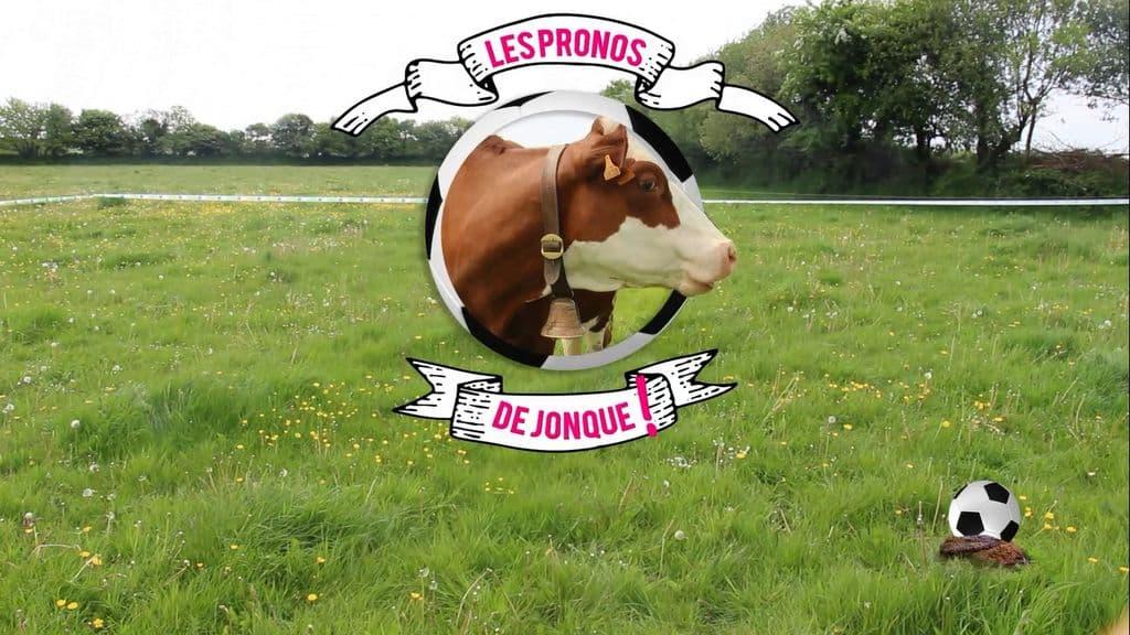 Coupe du Monde et animaux : Jonque la vache fait le buzz sur le web et à la radio !