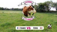 Match France Pérou, les pronostics de Jonque la vache choisie par la rédaction chez Entraid'