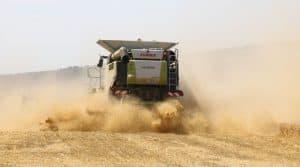 récolte des blés durs catastrophiuqe