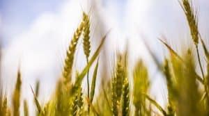 loi agriculture et alimentation : réactions des syndicats vis-àvis l'échec du gouvernement