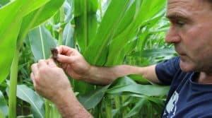 Taméo, date de l'ensilage, traitement du blé