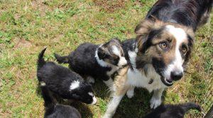 L'idéal est de suivre une formation avant d'acquérir son premier chien.