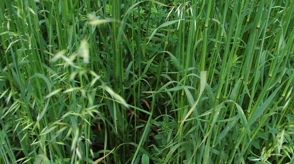 Quatre semoirs classés comme semoirs de semis direct et deux autres destinés plutôt aux TCS ont implanté le 27 juillet une plateforme de couverts végétaux située à Oiron dans les Deux-Sèvres.